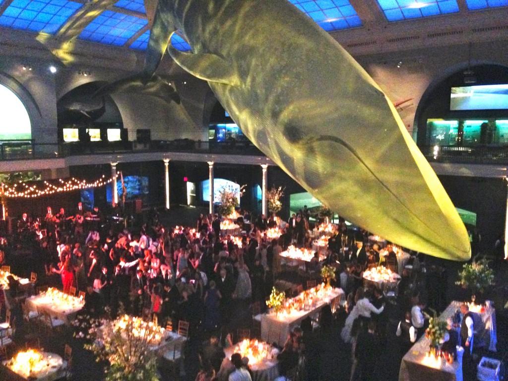 NYC Whale